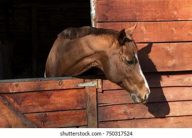 Head of a brown horse in a wooden stable
