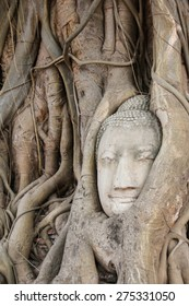 Head of Buddha statue covered by the tree roots at Mahathat Temple, Ayutthaya, Thailand.