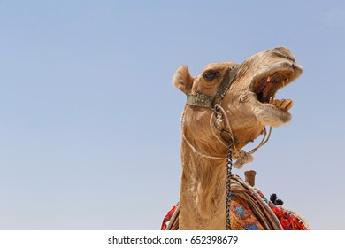 head of camel against blue sky