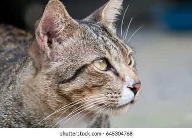 Head Cat in close-up