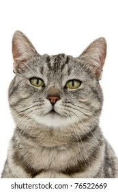 Head cat, on white background