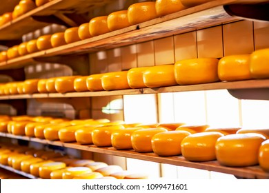 The head of cheese on the shelves. Zaanse-Schans. Netherlands