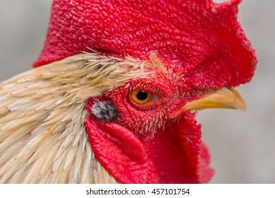 a head of chicken in Thailand