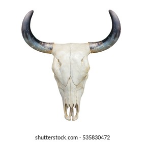 Head cow skull with horns isolate on white background