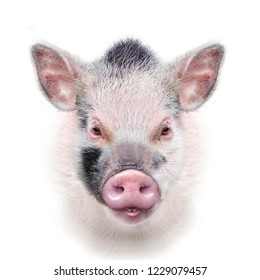head of cute spotted piglet isolated on white