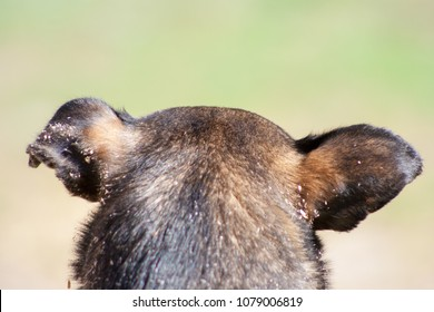 head and dog ears from the back on a green background
