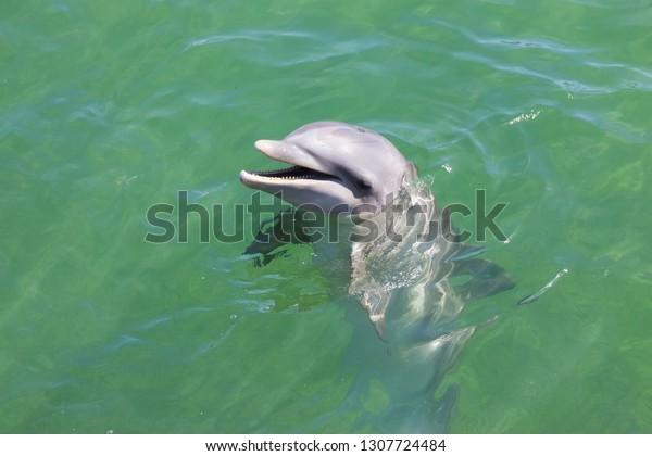 head-dolphin-blue-water-sea-600w-1307724