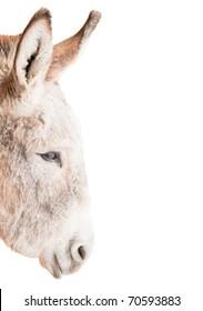 Head of Donkey isolated on white