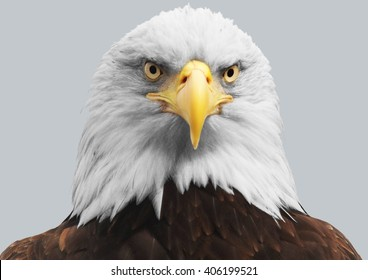 The head of an eagle on isolated background.