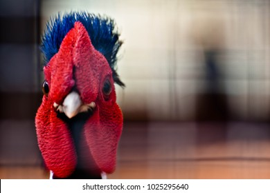 The head and face of a colorful chicken.  Close-up of chicken head.