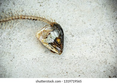 head of fishbone from fried mackerel rest from eating. in a white plate on the cement floor. on the background cement floor.