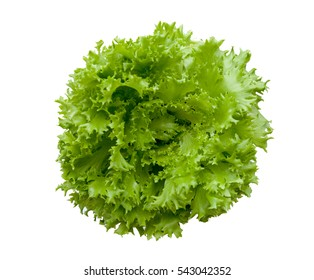 Head of fresh green lettuce salad isolated on white background.