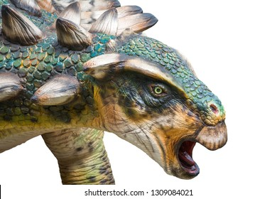 Head of Gastonia is a genus of herbivorous Ankylosaurian dinosaur from the Cretaceous, Gastonia has a sacral shield and large shoulder spikes, isolated on white background with clipping path