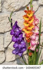 Head of  gladiolus flower against the background of a limestone wall