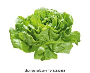 head of green garden lettuce