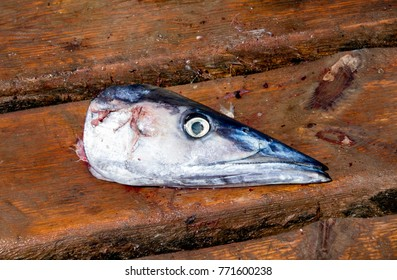 The head of a gutted dead Wahoo fish lays on the wooden pier in Santa Maria, Sal, Cape Verde after being caught. It looks sad.