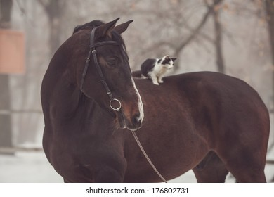 Head of the horse with the cat
