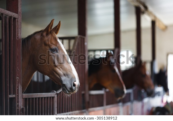 Head of horse looking over the stable doors on the background of other horses