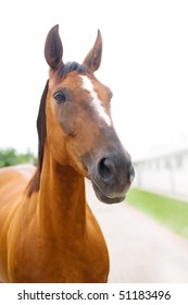 Head of the horse with white stripe