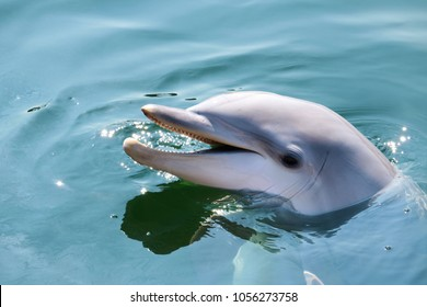 head of a lovely dolphin