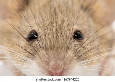 head mouse. macro