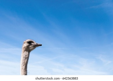 the head of an ostrich on a light background