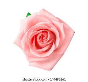 head of pink rose isolated on white background