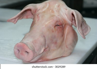 The head of a pork lying on the butcher´s desk. Focus on the nose. Shallow depth of field.