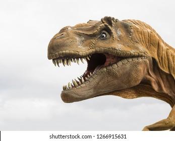 Head profile of a Tyrannosaurus rex (T-rex) model, biggest carnivore dinosaur, white background
