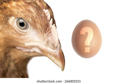 Head of red hen and the egg with question mark