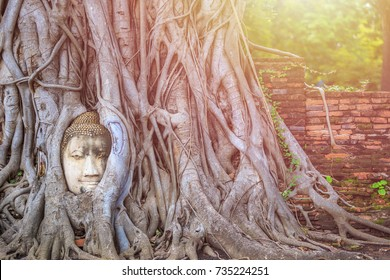 Head of the sandstone buddha in the big tree root. At Ayutthaya Historical Park in Ayutthaya province, Thailand.