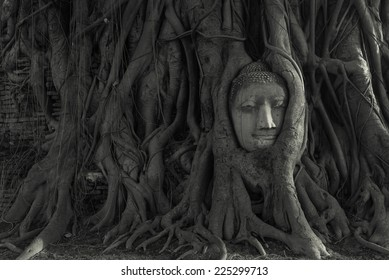 The head of the sandstone Buddha covered by roots of Bodhi tree at Wat Mahathat, Ayutthaya, Thailand