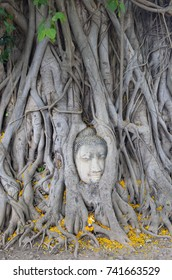 The Head of the Sandstone Buddha Image in the roots of a bodhi tree at Wat Mahathat in Ayutthaya, Thailand