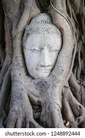 The head of the sandstone buddha image. Stone head of buddha inside the root at Wat Mahathat in AYutthaya, Thailand.Ayutthaya historical park. Amazing Thailand.Old Buddha statue in temple at Ayutthaya