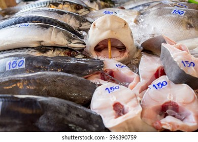 head of shark in the Asian market
