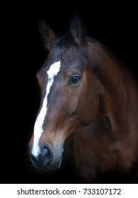 A head shot of a bay horse with a white blaze against a black background.