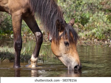 A head shot of a brown horse drinking water from a pond creating a reflection