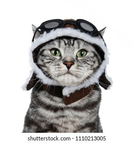 Head shot of handsome black tabby British Shorthair cat with green eyes wearing pilot hat and glasses looking at lens isolated on white background