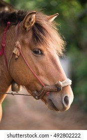 The head shot of a horse