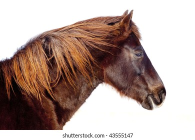 Head Shot of a Horse over white.