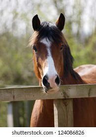 A head shot of a horse standing behind a fence.