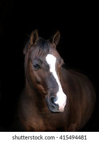A head shot of a liver chestnut horse against a black background.