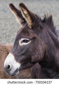 A head shot of a pretty donkey.