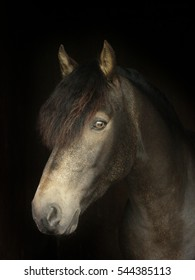 A head shot of a pretty horse against a black background.