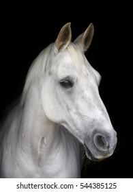 A head shot of a pretty horse against a black background.