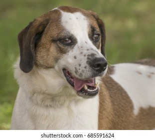 Head and shoulders portrait of mixed breed dog