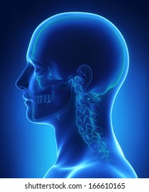 Head and skull anatomy