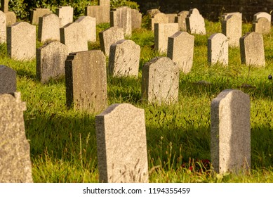 Head stones in autumnal sunlight. The back of a large number of stone monuments in a cemetery in late afternoon, autumnal. light.