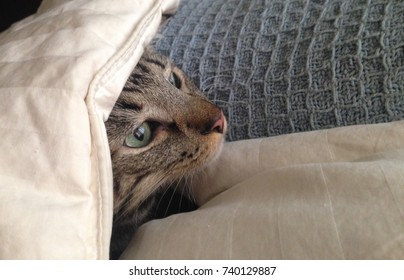 Head of a tabby cat looking out from under a blanket