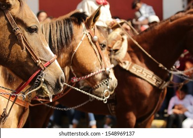head of three horses looking from left to right, using traditional mexican charro equipment